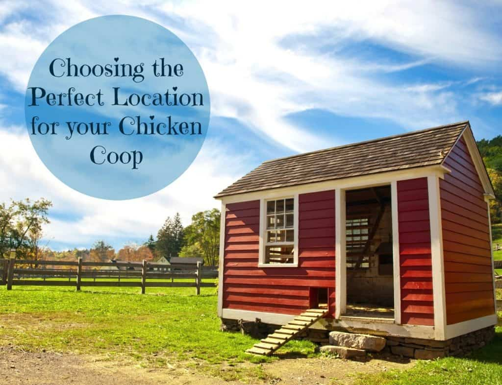Find out the six critical things you need to get right when choosing the perfect location for your coop. This is one decision you need to get right.