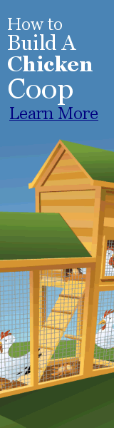 How to Build a Chicken Coop Image