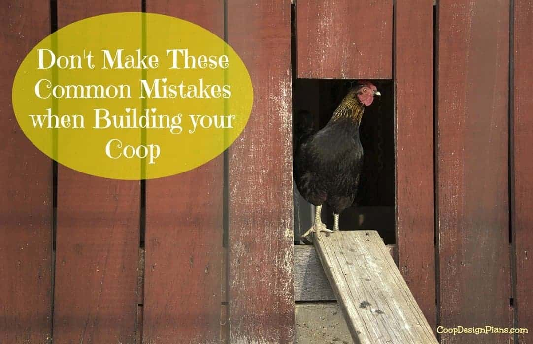 How to avoid the most common mistakes when building a chicken coop