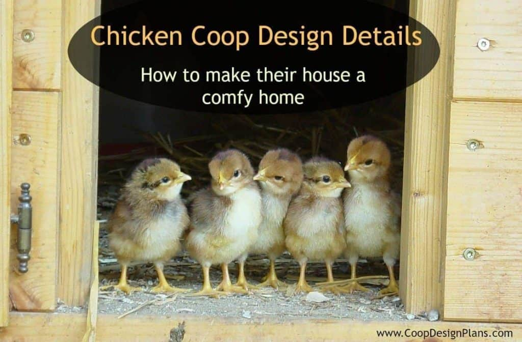 Designing your hen house with the chicken's comfort in mind.