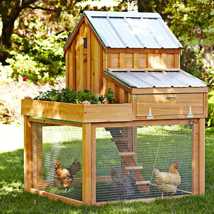 Chicken Coop with Garden on top