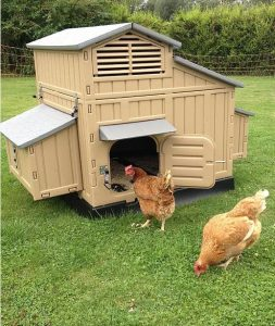 photo of two chickens grazing outside their coop