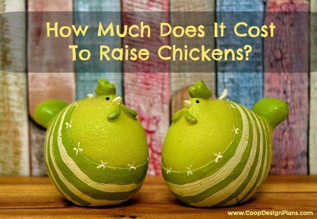 How much does it cost to raise chickens - featured image