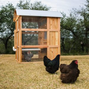 The Standup chicken coop
