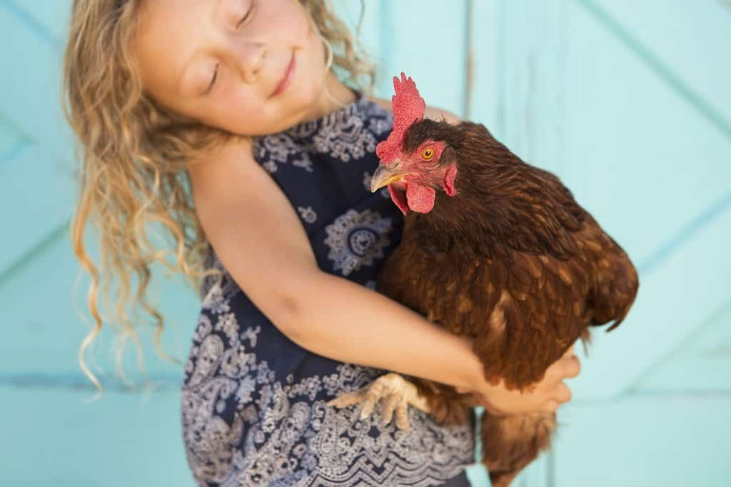 young girl holding an adult chicken in her arms