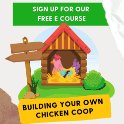Building Your Own ChickenCoop eCourse