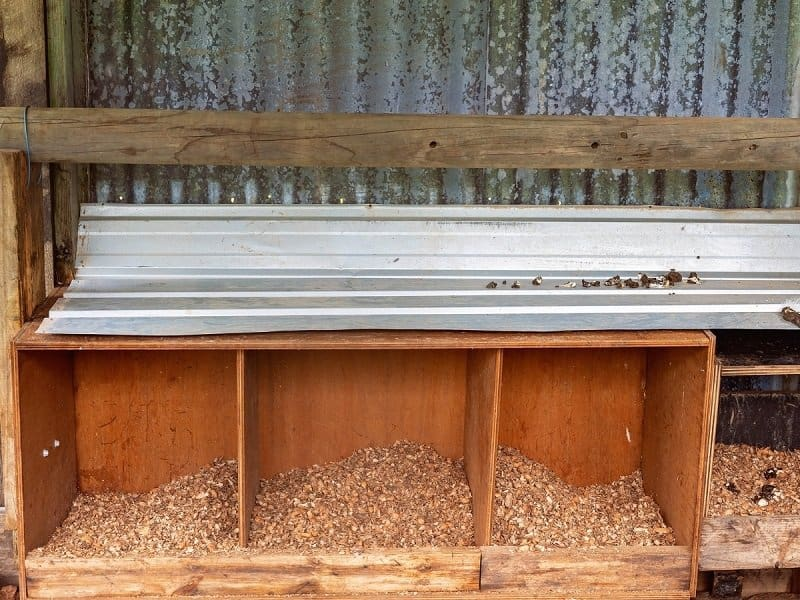 three wooden chicken nesting boxes filled with shavings and a metal tin roof