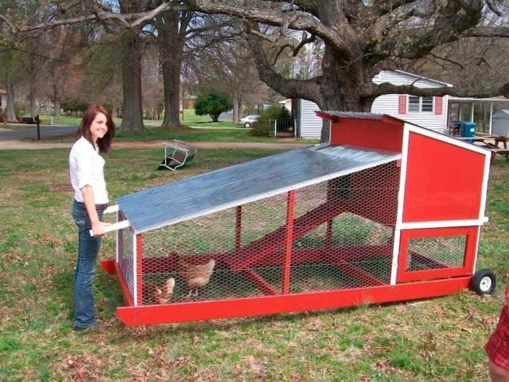 Small red chicken tractor