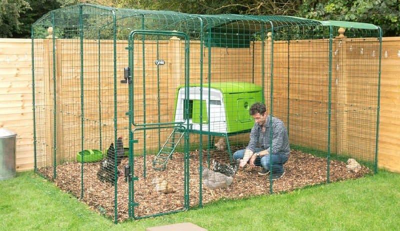 Wire 6x6 Chicken Run with Man feeding chickens inside
