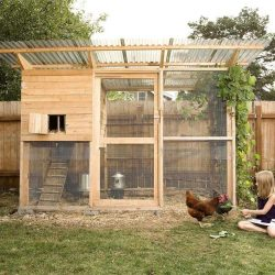 5 Chicken Coop Plans for 6 to 8 Chickens