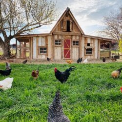 Walk-in Chicken Coops: 3 Top-rated Coop Kits and Plans for 2021